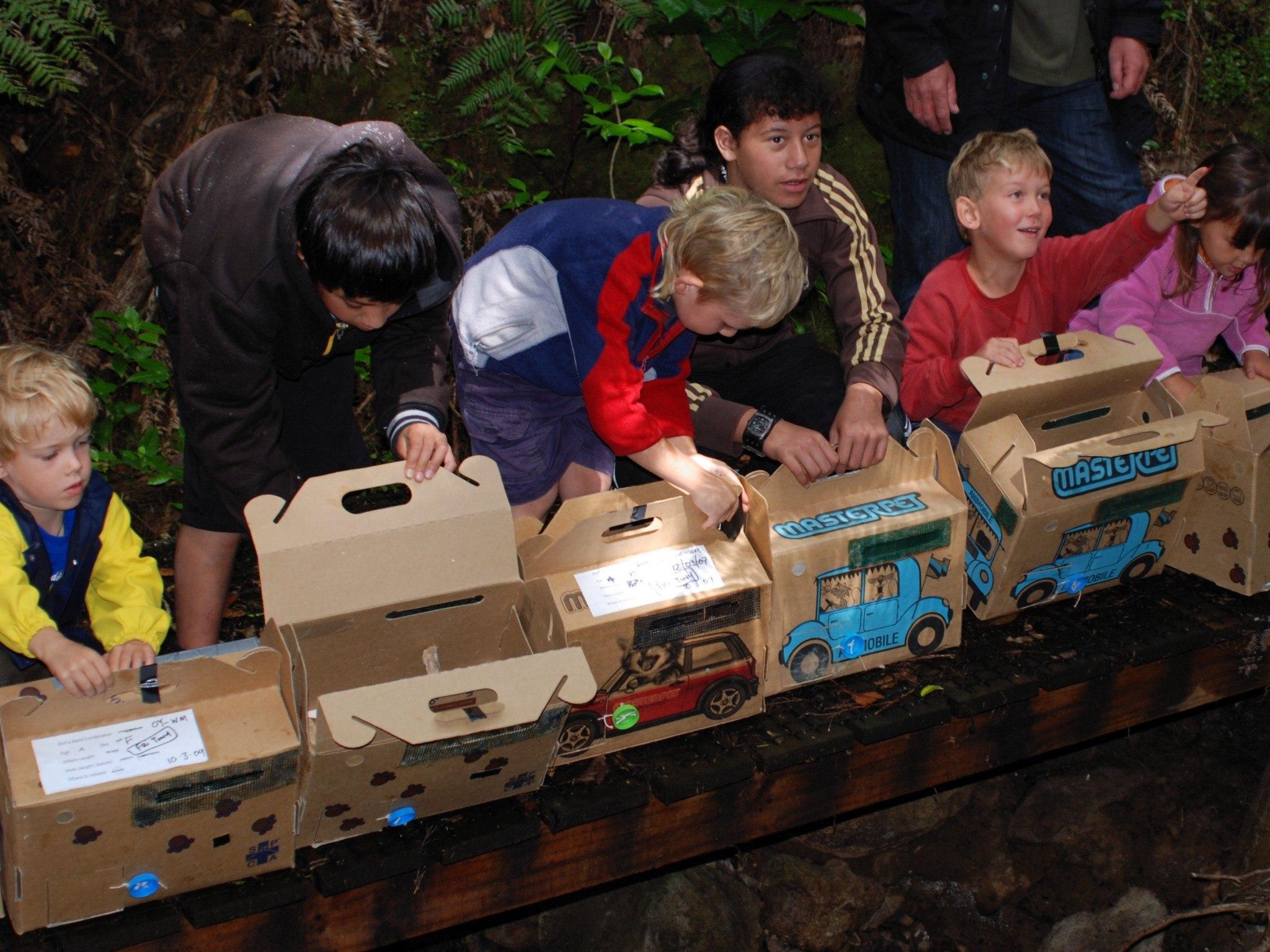 2005 North Island Robin - Tiritiri Matangi to Glenfern Sanctuary