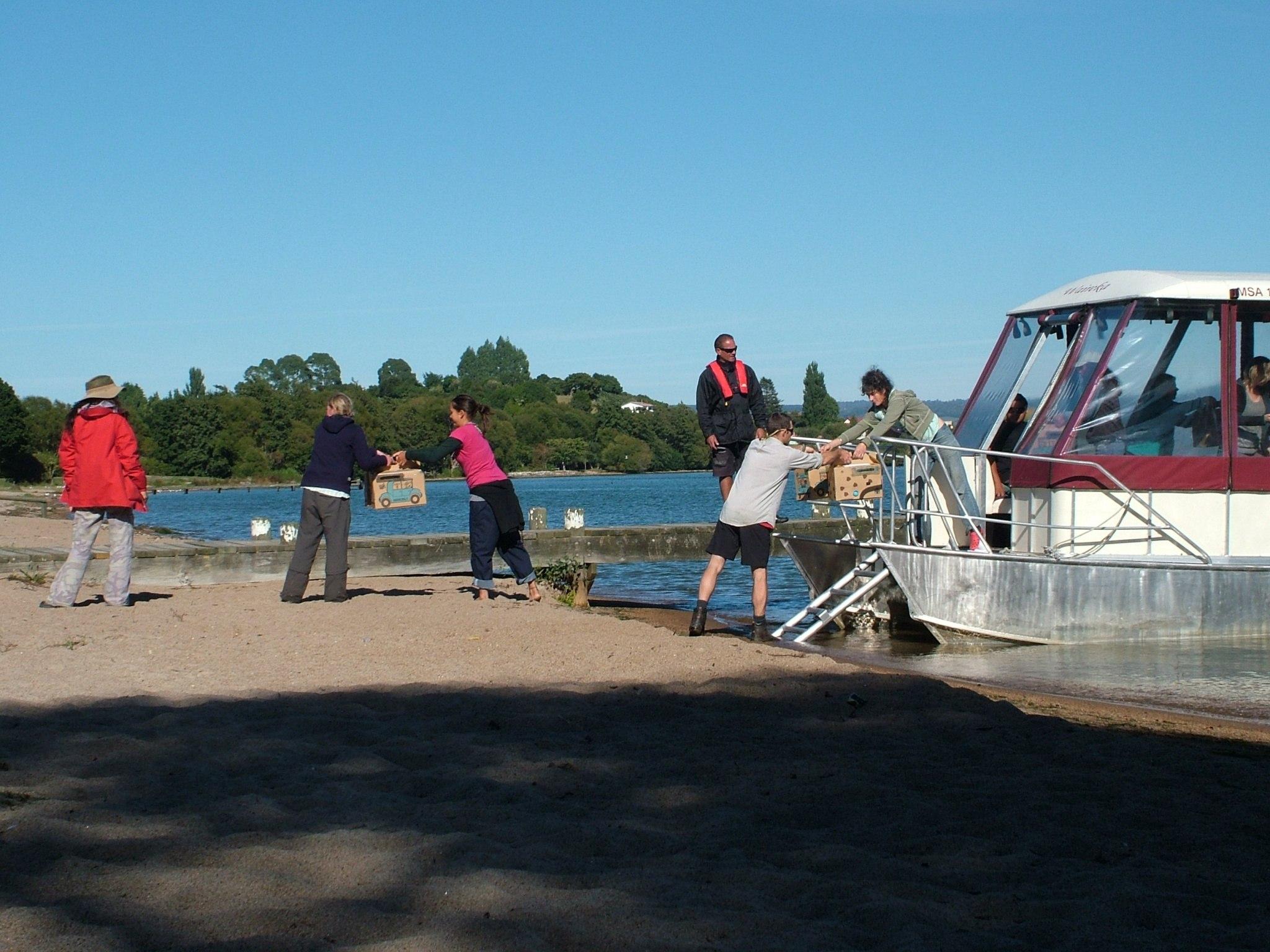 2009 - North Island Robin - Mokoia Island to Windy Hill Sanctuary