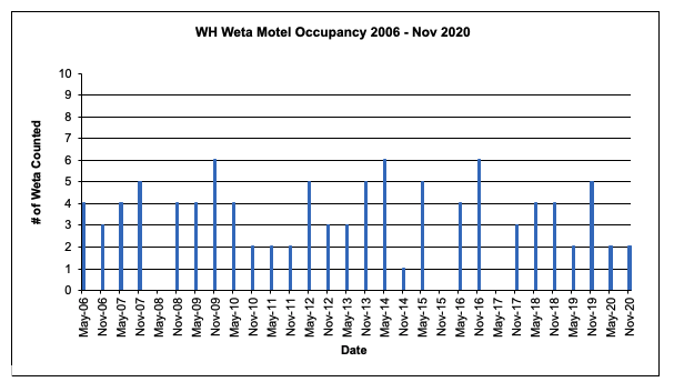 Weta Motel Occupancy 2006 - 2020
